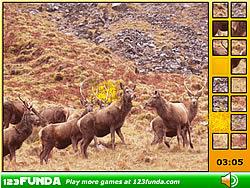 Hidden Spots Animals