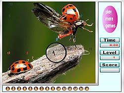 Bugs on the Woods Hidden Numbers