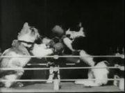Professor Welton's Boxing Cats (1894)