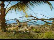 "Island of Lemurs: Madagascar - ""The Lemur Dance"""