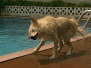 Bailey Swims