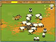 Kaban Sheep game