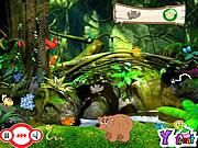 Chơi trò chơi miễn phí My Jungle