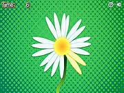 Daisy Petals game