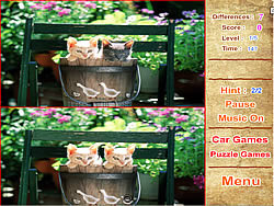 Cute Kittens Differences game