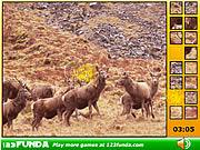 Play Hidden spots animals Game