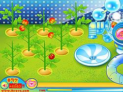 मुफ्त खेल खेलें Sue Tomato Factory
