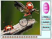 Bugs on the Woods Hidden Numbers game
