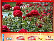 Play Puzzle craze - rose garden Game
