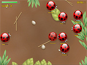 Play Spider bugs Game